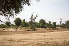 Savanne, Udtørret flodleje